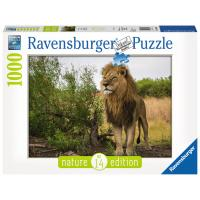 R 15160 Ravensburger Puzzle Pan 1000 King of the Lions